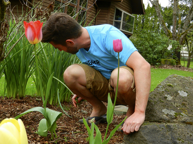 Roland Tulips 2